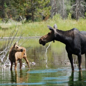moose-head-ranch-wildlife-7